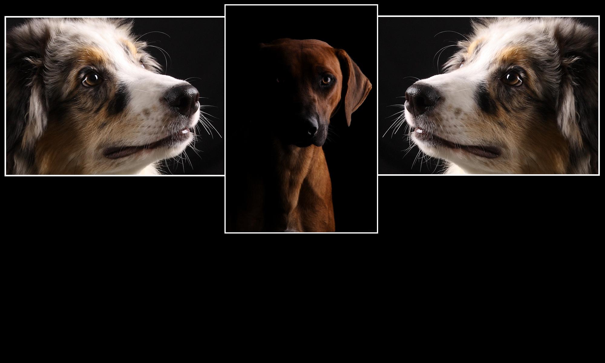 Hondenfotografie